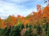 Autumn Hike at Balsam Ridge Christmas Tree Farm