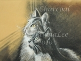 Charcoal Drawing with ShawnaLee - Southbury