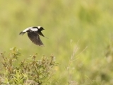 Citizen Science Project:  Maine Breeding Bird Atlas Messalonskee W19