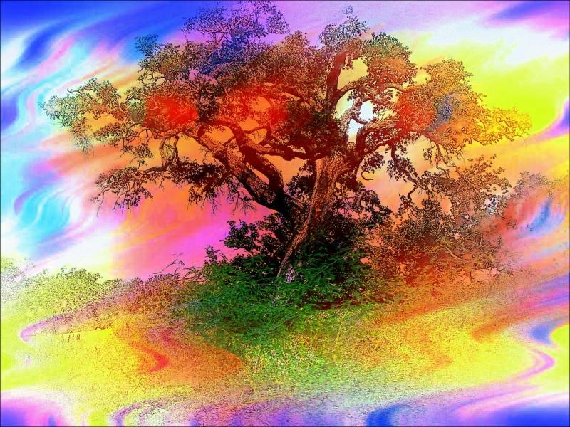 Original source: https://storage.needpix.com/rsynced_images/trees-83487_1280.jpg