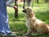 Dog Training Basics Messalonskee F18