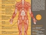 Energy Body Work:Polarity