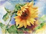Art: Watercolor for Beginners