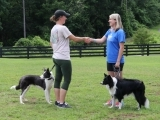 Canine Good Manners