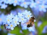 Fundamentals of Beginning Beekeeping (Online)
