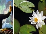 Afternoon Paint Along: Waterlillies (Online Class)