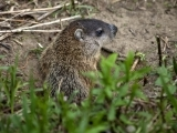 Groundhog Eve at Fields Pond