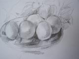Drawing The Still Life