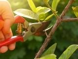Shrub & Tree Care-Prepare for Winter