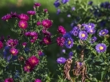 Perennial Favorites