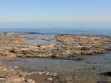 Marine Intertidal Ecology