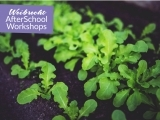 Grow Your Own Salad and Herb Garden (7-10)