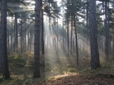 Wilderness Survival 101