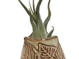 Handbuilt Pocket Planter