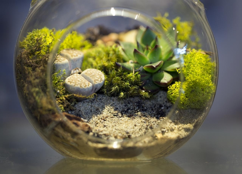 Original source: https://upload.wikimedia.org/wikipedia/commons/2/23/Terrarium_small.jpg