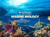 23L. MARINE BIOLOGY/LIVE