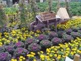 Grow Your Organic Garden