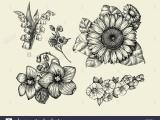 Botanical Drawing  White on White