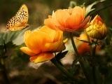 Watercolor Flower - Online Classs