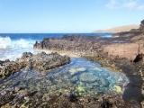 Wonders of the Tide Pool