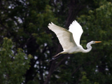 Birding Basics: Behavior