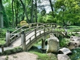 Art of Bonsai: Inspirations for Garden Design (Online)