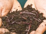Home/Community Composting 101