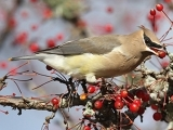 E2107 - Backyard Birding Basics - Maine Audubon