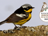 Rangeley Birding Festival (Virtual)