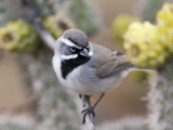 Birding Tour: Arizona