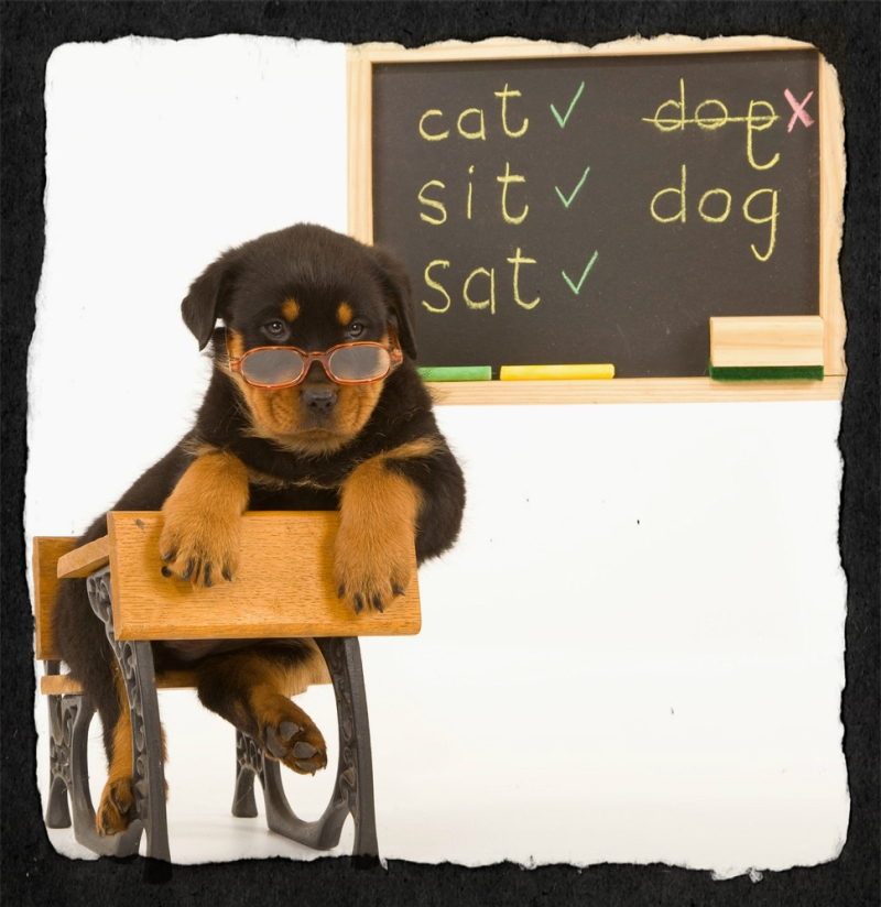 Original source: http://dogobediencecollege.com/wp-content/uploads/2012/09/rottie-blackboard-ripped-border.jpg