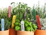 Culinary Herb Gardening Messalonskee W19