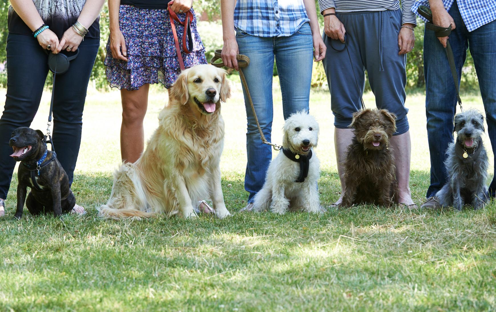 AKC Canine Good Citizen Class