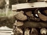 Firewood 101