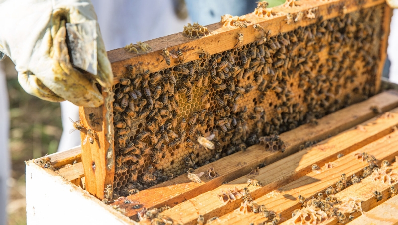Original source: https://realestateyak.com/wp-content/uploads/2018/03/beekeeping.jpg