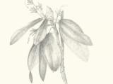 Botanical Drawing  Scaling Up