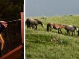 Prairie Horses Painting Workshop (Online Class)