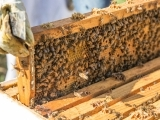 So You Want To Be a Beekeeper