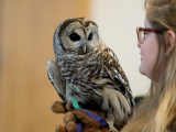 Owls of Birdsacre