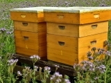 Bee Keeping for Beginners Messalonskee W20