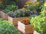 Uplifting Your Garden