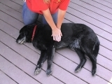 Cat and Dog First Aid/CPR