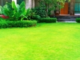 Healthy Lawn and Landscape