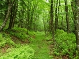 Natural Wonders of the Maine Woods