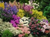 Perennial Plant Combinations '20