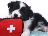 706S19 Pet First Aid and Common Vet Emergencies