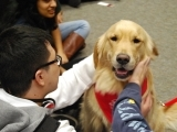 Therapy Dog Workshop