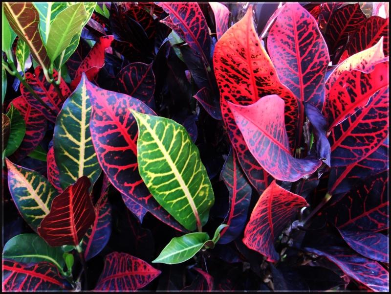Original source: http://jackscrap.files.wordpress.com/2011/06/plants.jpg