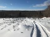 Snowshoe Balsam Ridge Christmas Tree Farm