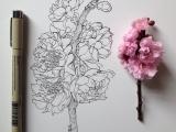 Botanical Drawing  Spring Blossoms